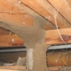 Read Article: Is your home Conducive to Termites? What to look for.. by Victorian House Inspections VIC