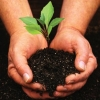 Read Article: Planting and Caring for a New Tree by Just Stumpgrinding QLD