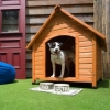 Read Article: Moving interstate with your pets by Budget Self Pack Containers NSW