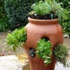 Read Article: Container gardening: Food right in your backyard -- or balcony by Simply Sheds NSW