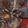 Read Article: Winter is Coming! Chainsaw Tips and Tricks for Beginners by Beacon Equipment  WA