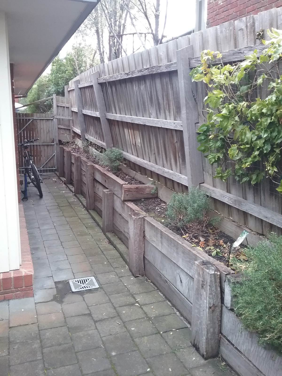 Ideas for tough plants for a very shady and dry spot