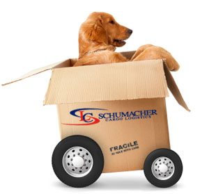Tips for moving with pets?