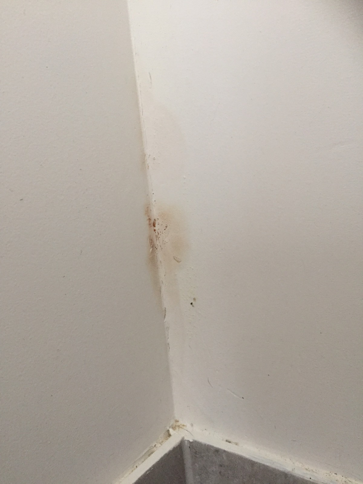 **help** is this damp or water damage