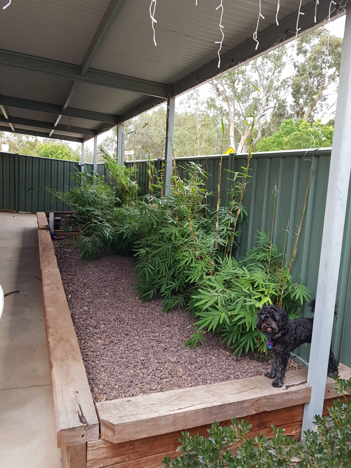 Adding soil to established garden bed