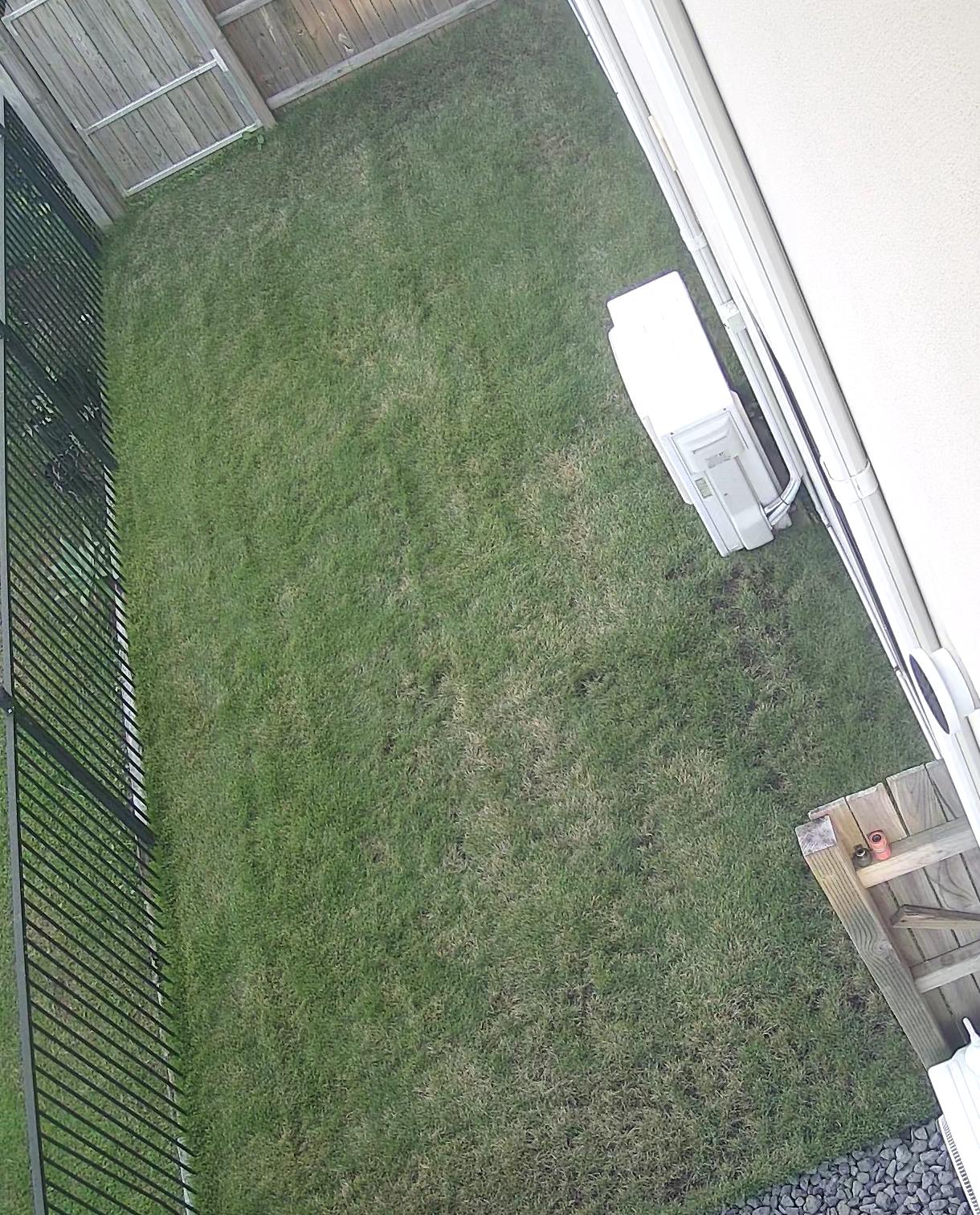 Grass has taken a turn
